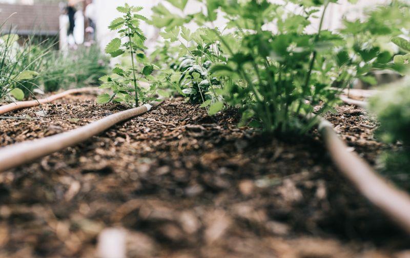L'hort ecològic